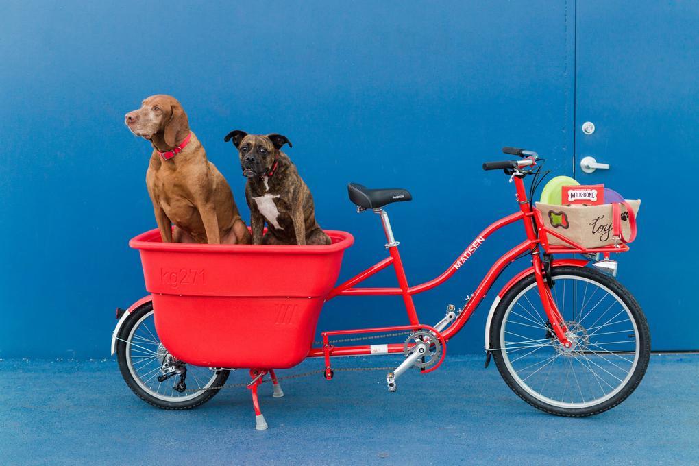 Madsen Cycles' Bucket Bike